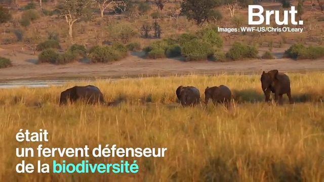 Au moins 90 éléphants ont été retrouvés morts, leurs défenses d'ivoire méthodiquement arrachées, ces dernières semaines au Botswana. Ils sont victimes d'une des vagues de braconnage les plus meurtrières recensées récemment sur le continent africain.