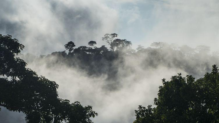Forêt tropicaleau Cameroun,9 août 2017. (MICHAEL RUNKEL / ROBERT HARDING PREMIUM)
