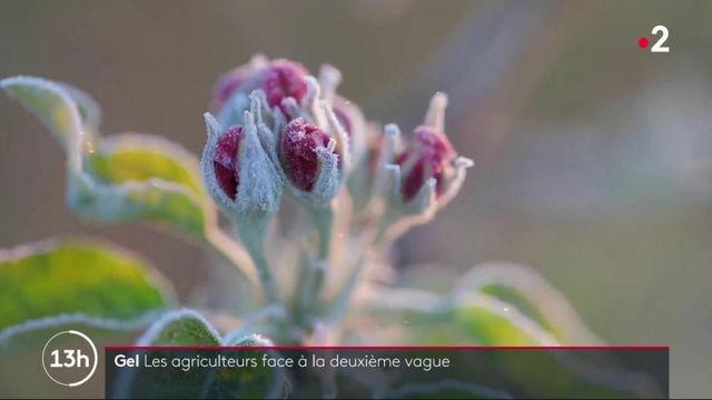 Agriculture : la crainte du retour du gel