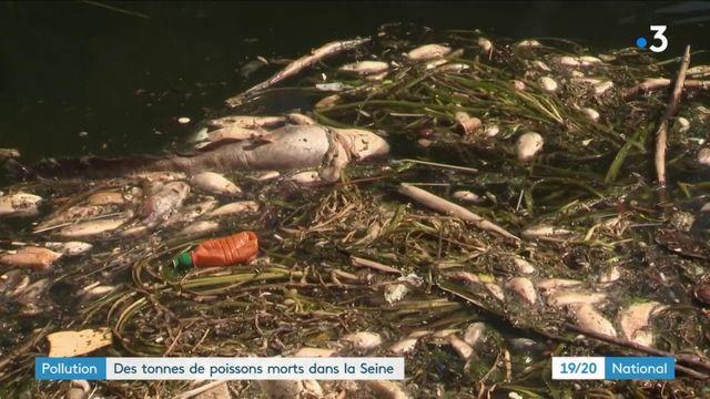 Pollution : des tonnes de poissons morts repêchés dans la Seine