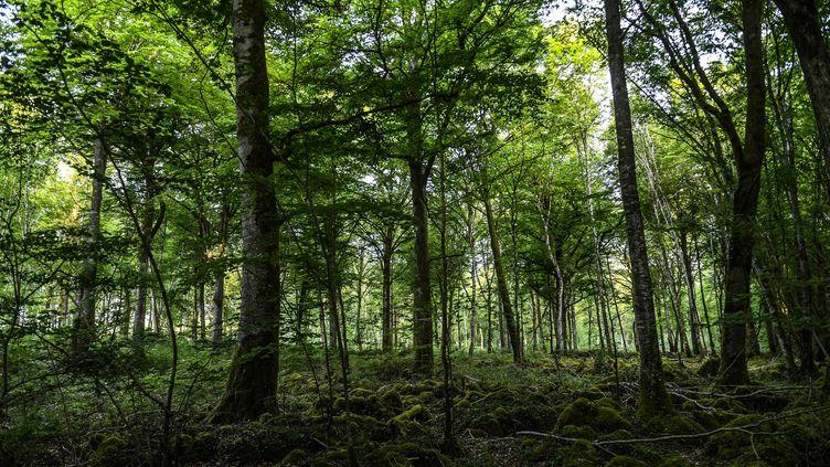 Le parc national des forêts de Champagne et Bourgogne, près de Châtillon-sur-Seine (Côte-d'Or). (PHILIPPE DESMAZES / AFP)