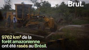 VIDEO. En 2019, la déforestation a explosé dans la partie brésilienne de la forêt amazonienne (BRUT)