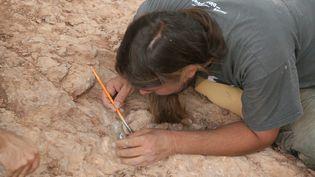 Unpaléontologue sur un site de fouilles a la recherche d'ossements et d'oeufs de dinosaures. (Photo d'illustration) (SERGE GUEROULT / MAXPPP)