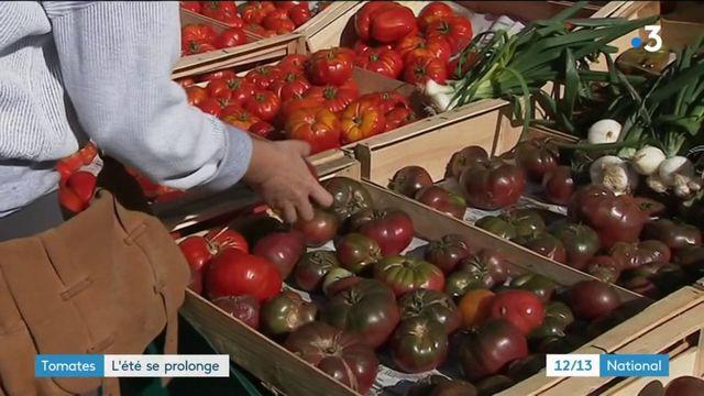 Tomates : l'été se prolonge