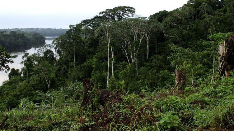 Au Gabon, la forêt recouvre environ 85% des terres. (Christophe LEPETIT / Onlyword / AFP)