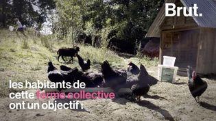 """VIDEO. Cette ferme se prépare en cas """"d'effondrement"""" (BRUT)"""
