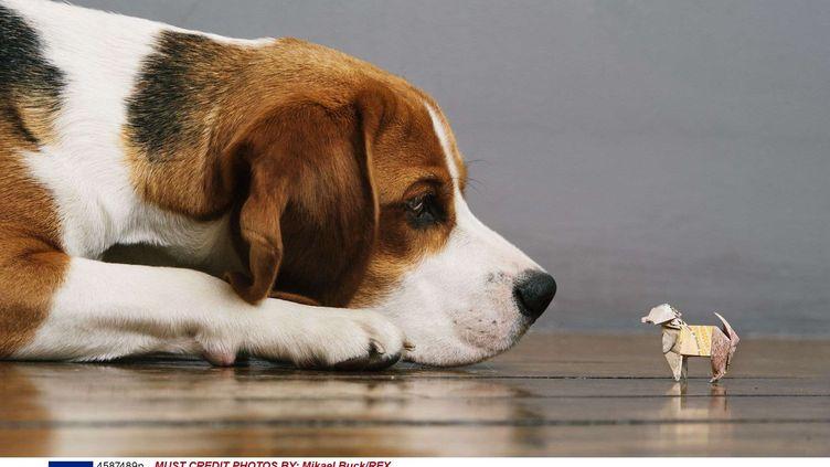 Le beagle de la famille Woodbroke est mort en avril 2015. Luke, 3 ans, et sa mère n'ont cessé de lui écrire depuis. (MIKAEL BUCK / REX / SIPA)