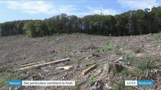 Ils veulent sauver leur forêt. Dans le Morvan, des citoyens achètent des parcs naturels pour empêcher leur destruction ou leur exploitation intensive, au détriment de la biodiversité. (FRANCE 3)