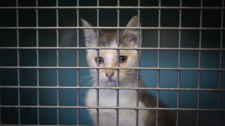 Un chat dans un refuge de la SPA, àGennevilliers (Hauts-de-France), le 13 août 2019. (OLIVIER MORIN / AFP)