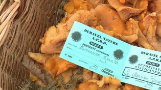 Dans le Lot, les amateurs de champignons se réjouissent des conditions météo de l'été. On y trouve même des cèpes, fait rare pour la saison. (CAPTURE ECRAN FRANCE 3)