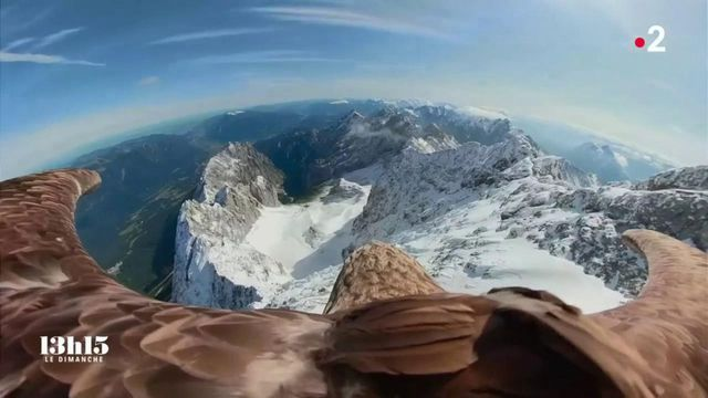 VIDEO. Sur le dos d'un aigle pêcheur au-dessus du massif du Mont-Blanc dont les glaciers fondent aujourd'hui à vue d'œil