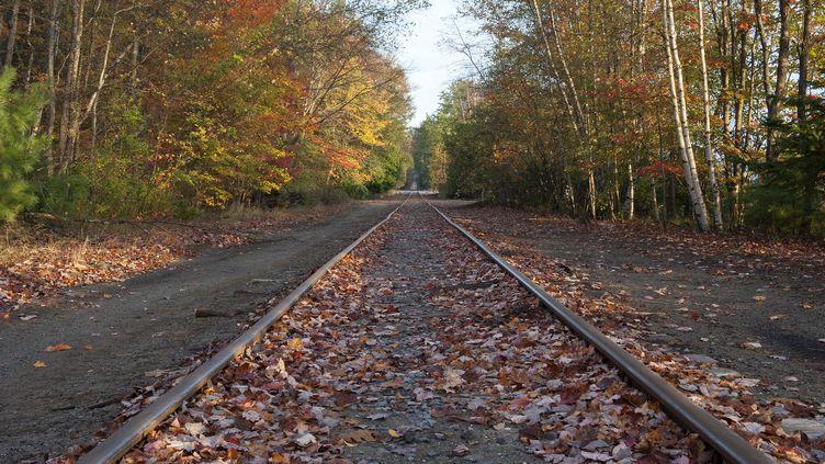 Une voie de chemin de fer au milieu d'une forêt. Photo d'illustration. (MAXPPP)