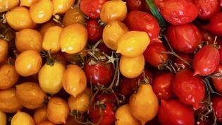 """Les tomates""""piennolo"""" poussent sur les pentes du Vésuve. (LAURENT MARIOTTE / RADIO FRANCE)"""