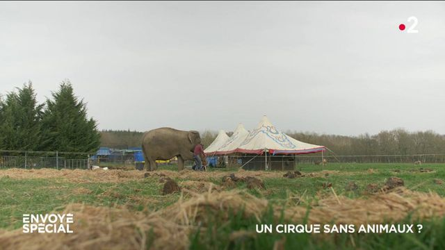 Envoyé spécial. Un cirque sans animaux ?