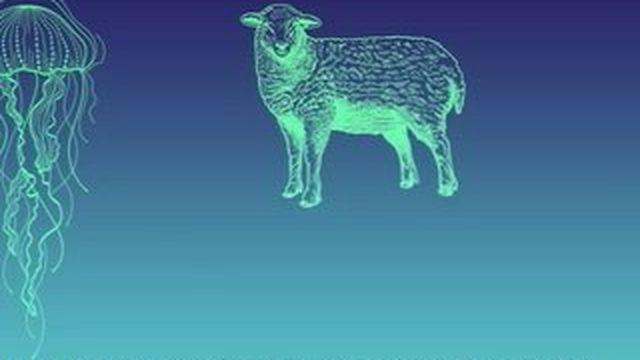 OGM : un particulier consomme un agneau-méduse