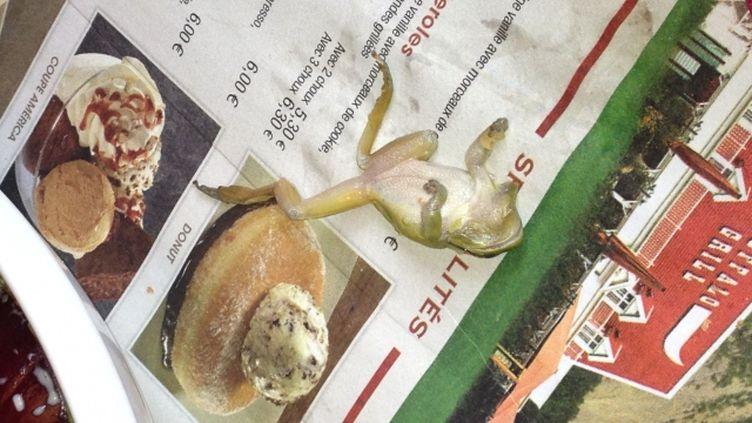 Séverine Vercamer a découvert une grenouille dans son assiette le 16 février 2013 dans un Buffalo Grill à Lomme (Nord) et a pris l'animal en photo. (SÉVERINE VERCAMER / FRANCE 3 NORD PAS-DE-CALAIS)