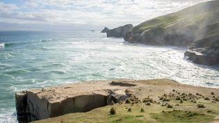 Le continent Zéalandia serait situé au large de la Nouvelle-Zélande. (KAI SCHWÖRER / SCHWÖRER PRESSEFOTO)