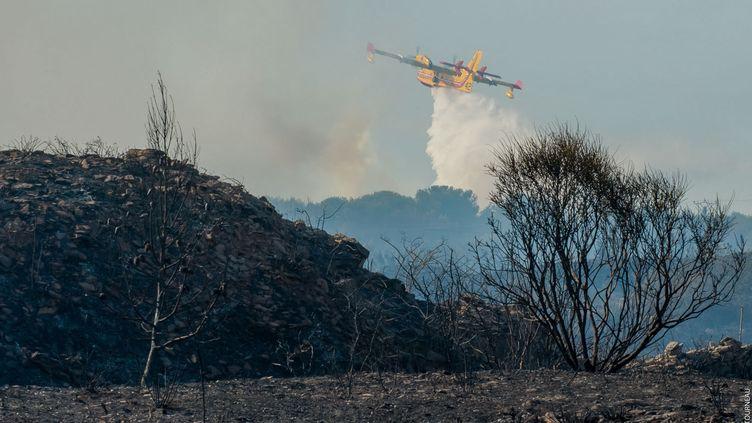Un Canadair largue sa cargaison d'eau sur les flammes (illustration). (AURÉLIEN THIRARD / RADIO FRANCE)