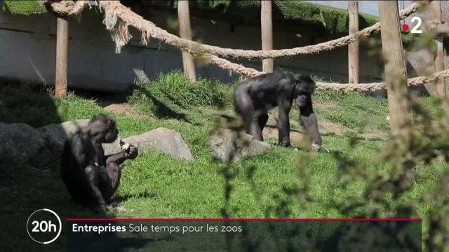 Covid-19 : les zoos en difficulté financière