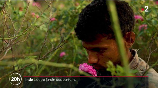Inde : à la découverte de Kannauj, l'autre capitale du parfum