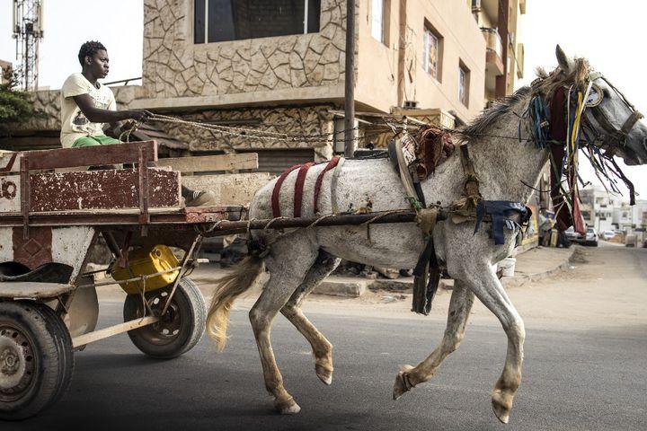 Selon une estimation, 7000 attelages parcourent les rues de Dakar quotidiennement. (JOHN WESSELS / AFP)