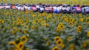 Le peloton passe entre deux champs de tournesols à Quillan (Aude), le 10 juillet 2010. (THOMAS SAMSON / AFP)