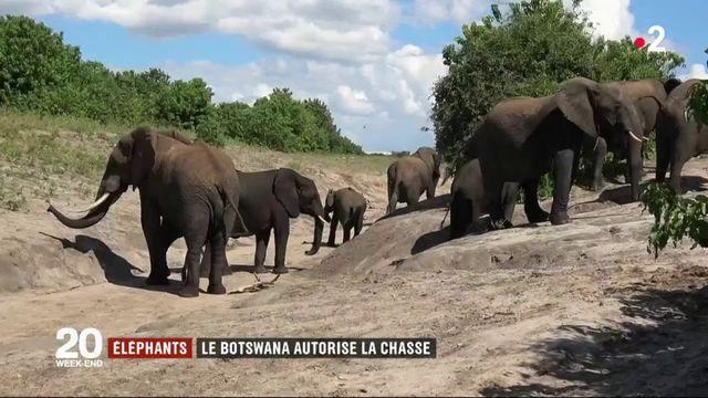 Botswana : la chasse aux éléphants de nouveau autorisée