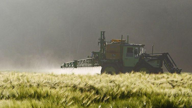 """Pesticides: la FNSEA dit non aux arrêtés municipaux, oui au """"cas par cas"""" (Crédits Photo : © Pixabay / Erich Westendarp)"""