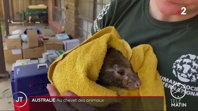L'Australie tente de sauver ses animaux