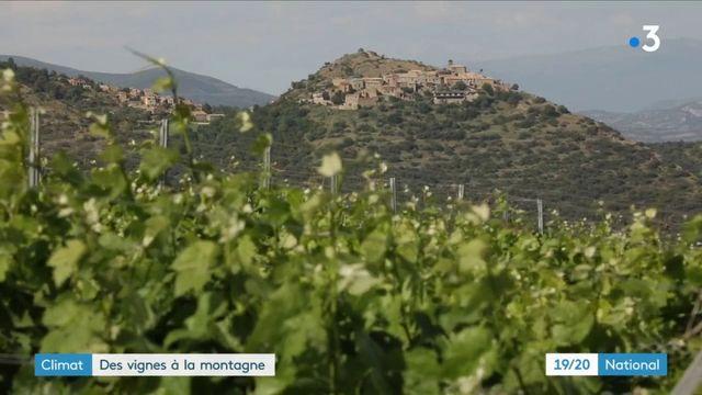 Espagne : des vignes plantées en altitude pour faire face à la sécheresse