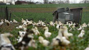 Des canards dans l'élevage de Serge Mora à Mugron (Landes), le 29 décembre 2020. (GAIZKA IROZ / AFP)