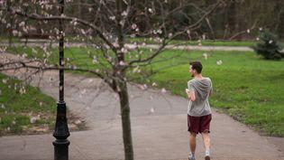Des fleurs apparaissent sur les arbres du Alexandra Palace Park, dans le nord de Londres, le 18 décembre 2015, par 16°C. (LEON NEAL / AFP)
