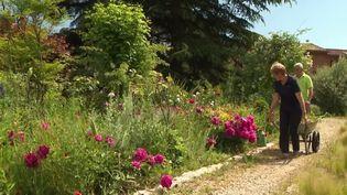 Alpes-Maritimes : à Grasse, le jardin de Marcel et Lucille est un hymne aux pivoines (France 3)