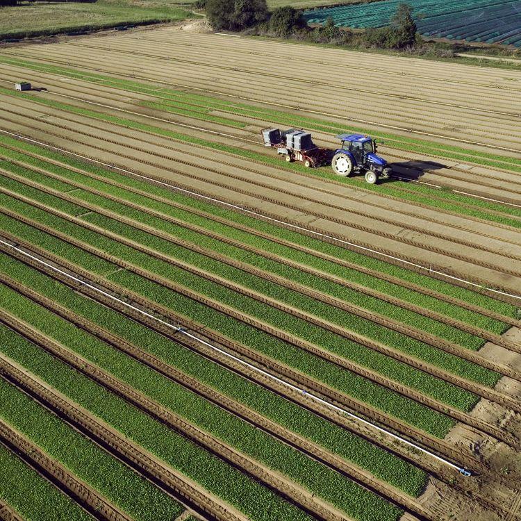 Une plantation de mâche, le 4 août 2005 à Machecoul (Loire-Atlantique). (MAXPPP)
