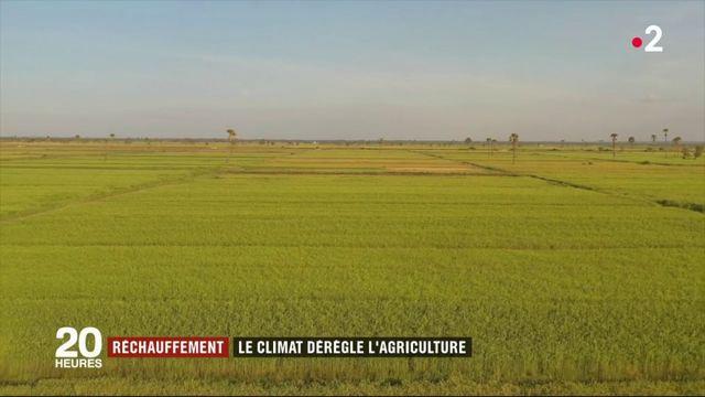Réchauffement : le climat dérègle l'agriculture