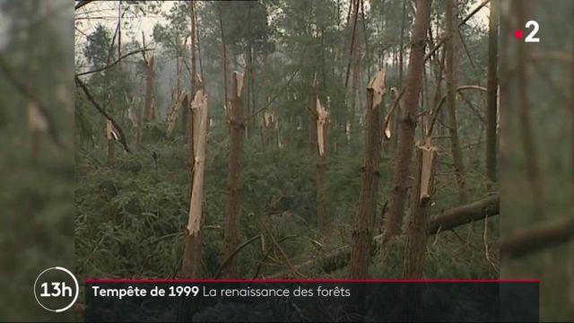 Tempêtes de 1999 : la renaissance des forêts